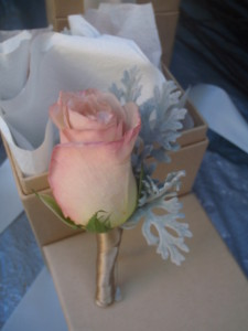Honeymoon Rose and Dusty Miller Foliage